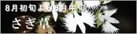 さぎ草(鷺草)