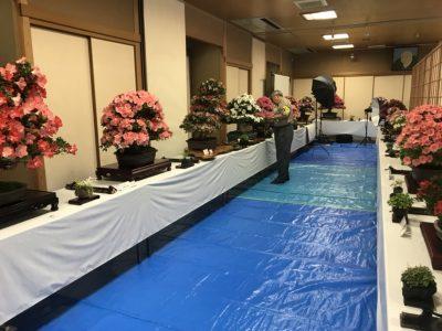 皐月(サツキ)展のご案内 5月24日(金)~26日(日)